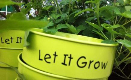 Let it grow!