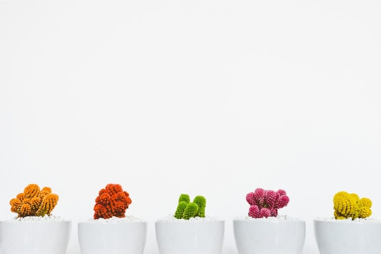 Inspiratie - Een dosis inspiratie persoonlijke groei- by Scott Webb - art-artistic-beautiful-bloom-311458