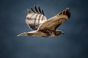 Bevlogenheid bevorderen - Millennials en bevlogenheid 2 Bevlogenheid bevorderen - by Frank Cone - bird-flying-3959918
