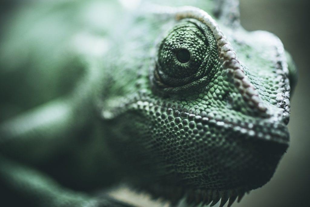 Indirect leren Leren door te camoufleren-pexels-cmonphotography-1809624